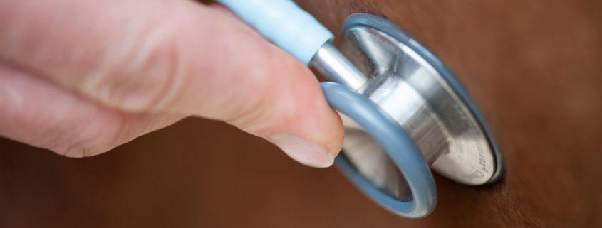 Gezondheidscertificaat paardentransport